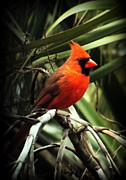 Backyard Birds Prints - Simply Red Print by Karen Wiles