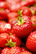 Rosaceae Posters - Simply Strawberries Poster by Anne Gilbert