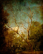 Fantasy Tree Art Print Photo Posters - Sing No Sad Songs For Me Poster by Roman Solar