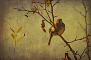 Nature Photos Mixed Media Posters - Singing Sparrow Poster by Peggy Collins