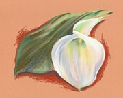 Bloom Pastels Posters - Single Calla Lily and Leaf Poster by MM Anderson