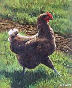 Single Chicken Walking Around On Grass Print by Martin Davey