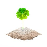 Four In Hand Art - Single Four Leaf Clover Isolated on White Background by Iam Nee