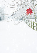 Snowy Winter Posters - Single Red Leaf Poster by Christopher and Amanda Elwell