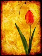 Ian Jeffrey - Single Red Tulip
