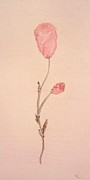 Bud Pastels Posters - Single Stem Rose Bud Poster by Christine Corretti