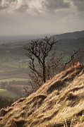 Bank; Clouds; Hills  Prints - Single tree Sutton Bank Print by Deborah Benbrook