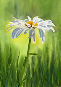 Single Painting Framed Prints - Single White Daisy  Framed Print by Sharon Freeman