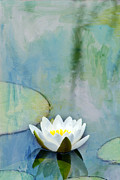 Lilies Prints - Single White Water Lily Print by Rebecca Cozart