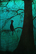 Chiaroscuro Digital Art - Singular Anhinga  by Kandy Hurley