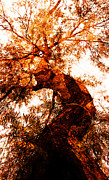 Juan Jose Espinoza - Sinuous Tree