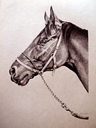 Horse Drawings Framed Prints - Sir Alfred 2 Framed Print by Patricia Howitt