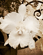 Sisterly Prints - Sisterly Orchid Print by Trish Tritz