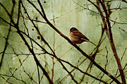 Birds Metal Prints - Sittin In A Tree Metal Print by Rebecca Cozart