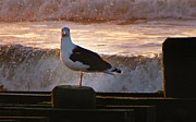 Sandpipers Posters - Sittin On The Dock Of The Bay Poster by David Dehner