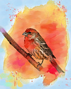 House Finch Framed Prints - Sitting for My Portrait Framed Print by Betty LaRue