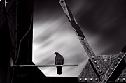 Surreal Art Photos - Sitting on a stick by Bob Orsillo