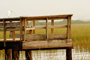 Everglades Metal Prints - Sitting on the Dock Metal Print by Rebecca Cozart