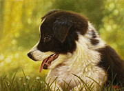 Pastel Dog Paintings - Sitting pretty by John Silver
