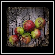 Spoils Prints - Six Bad Apples Print by Barbara Griffin