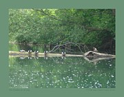 Patricia Overmoyer - Six Ducks on a Log