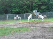 Jackson Art - Six Flags Great Adventure - Animal Park - 121247 by DC Photographer
