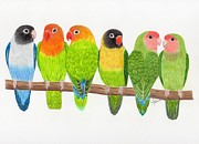 Lovebird Drawings Prints - Six Lovebirds Print by Rita Palmer
