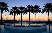 Saint Petersburg Prints - Six Palms Print by David Lee Thompson
