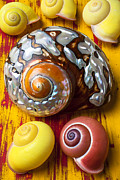 Aquatic Posters - Six snails shells Poster by Garry Gay