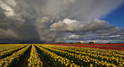 Striking Metal Prints - Skagit Valley Storm Metal Print by Mike Reid