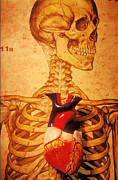 Medicine Posters - Skeleton and heart model Poster by Garry Gay