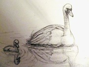 Swans... Drawings - Sketched Swans Study by Heather Latchford