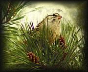 Kim Pate - Sketchy Sparrow