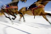 Turf Art - Ski Joring Race by Vicki Couchman
