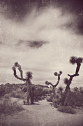 Joshua Tree National Park Framed Prints - Skies May Fall Framed Print by Laurie Search