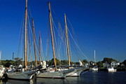 Docked Sailboats Posters - Skipjacks  Poster by Sally Weigand