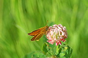 Bill Morgenstern - Skipper on Clover