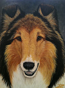 Collie Painting Framed Prints - Skippy Framed Print by Ana Marusich-Zanor