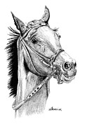 Thoroughbred Drawings - Skittish Race by Kayleigh Semeniuk