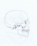 Human Skull Drawings - Skull 2 by Chris Istenes