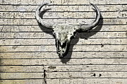 Bull Horns Posters - Skull And Horns Poster by Larry Butterworth