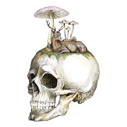 Jakarin Prawatruangsri - Skull and Mushrooms