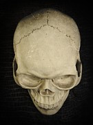 Halloween Photo Posters - Skull Poster by Edward Fielding