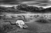 Luis Digital Art - Skull in the Desert bw by Jerry Fornarotto