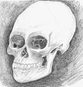 Human Skull Drawings - Skull by J M L Patty
