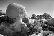 High Dynamic Range Photos - Skull Rock by Peter Tellone