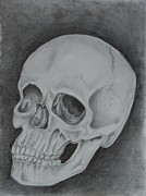 Human Skull Drawings - Skull Study #1 by Stacy Smith