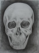 Human Skull Drawings - Skull Study #2 by Stacy Smith
