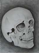 Human Skull Drawings - Skull Study #3 by Stacy Smith