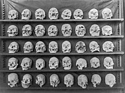 Dead Heads Prints - Skulls On Display Print by Underwood Archives